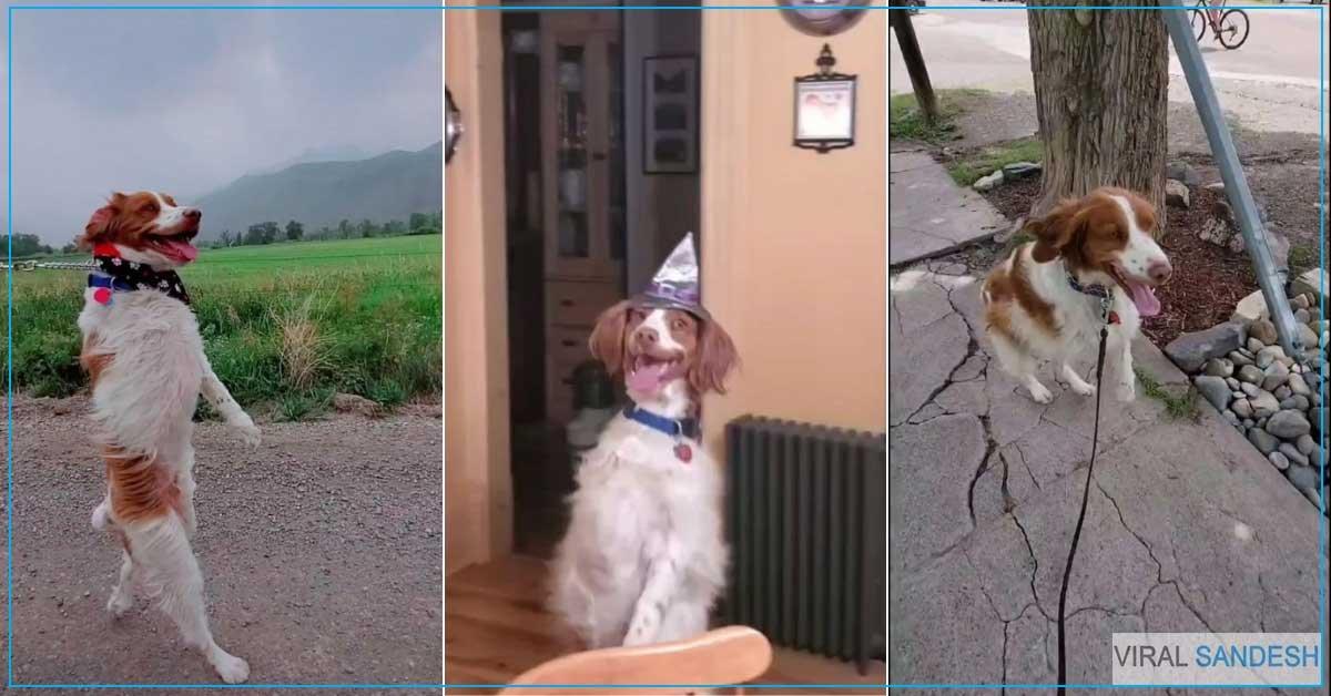 Dexter Dog Tik Tok Star Viral Video
